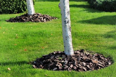 Foto de Chips of wooden bark used for mulching the tree trunk - Imagen libre de derechos