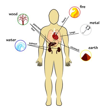 Illustration pour Five elements and human organs - image libre de droit
