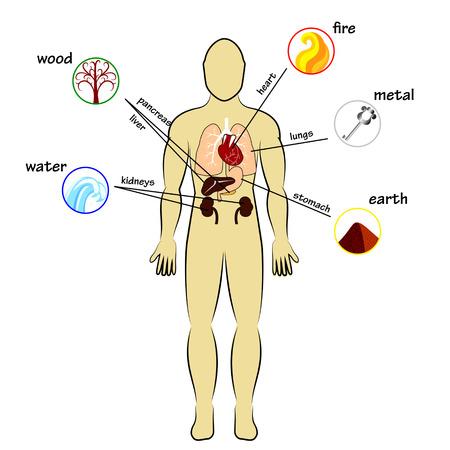 Ilustración de Five elements and human organs - Imagen libre de derechos