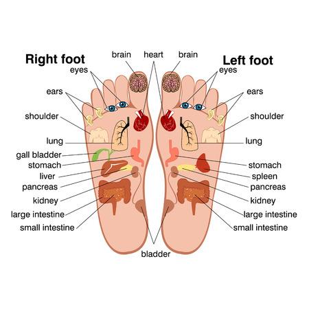 Ilustración de Reflexology zones of the feet - Imagen libre de derechos