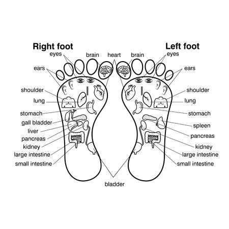 Ilustración de Reflexology zones of the feet vector illustration, - Imagen libre de derechos