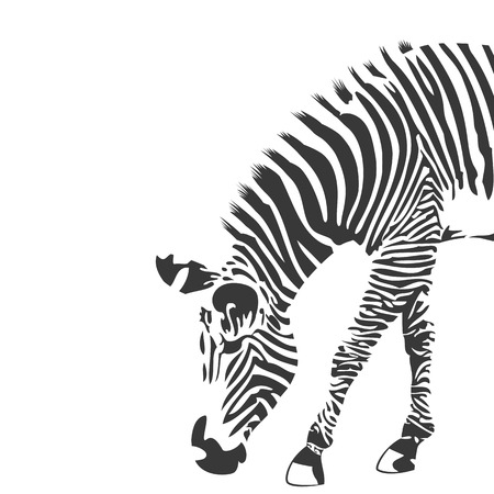 Illustration pour Illustration of zebra in black and white - image libre de droit