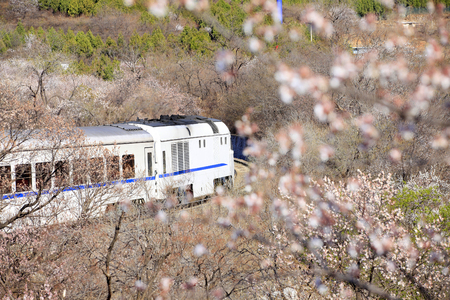 Foto per The train running, beside the road and laden with flowers - Immagine Royalty Free