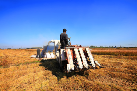 Foto de Harvester machine is harvesting ripe rice - Imagen libre de derechos