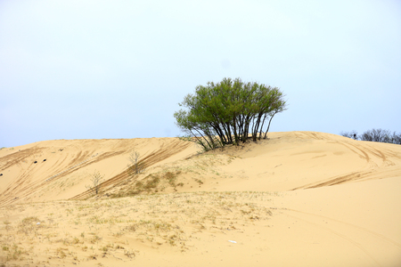 Photo for Desert scenery is very beautiful - Royalty Free Image