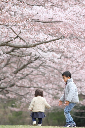 Japanese brother and sister (6 years old boy and 1 year old girl) and cherry blossoms
