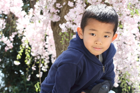 Japanese boy and cherry blossoms (second grade at elementary school)