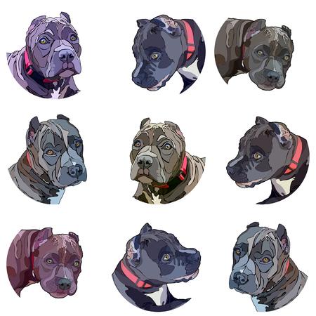Illustrazione per Stickers with pitbulls. Vector illustration, EPS 10 - Immagini Royalty Free