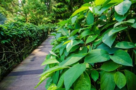 Photo for Walk way Path through a Tranquil Verdant Botanical Garden - Royalty Free Image