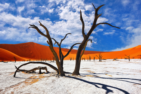 Photo for Dead Camelthorn Trees against red dunes and blue sky in Deadvlei, Sossusvlei. Namib-Naukluft National Park, Namibia, Africa - Royalty Free Image