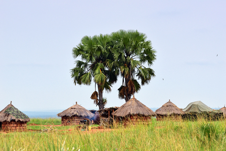 Photo pour African huts and palm trees in the village in savannah Uganda. Africa - image libre de droit