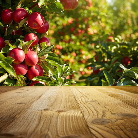 Photo for autumn apple orchard background - Royalty Free Image