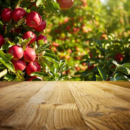 Photo pour autumn apple orchard background - image libre de droit