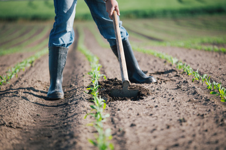 Photo for Manual labor in agriculture - Royalty Free Image