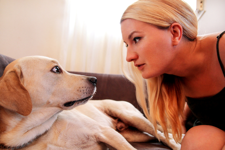 Woman with dogs. The dog gives a paw her female owner on sofa. Happy Pretty girl petting and looking her Yellow labrador retriever dog laying in the bed at home. Owner having fun with his pet concept.