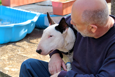 Man with dog. English Bull Terrier white dog in company with his owner sitting and enjoying in the garden outdoor and petting a lovely dog. Human having fun with his pet. Pet concept, domestic animal.