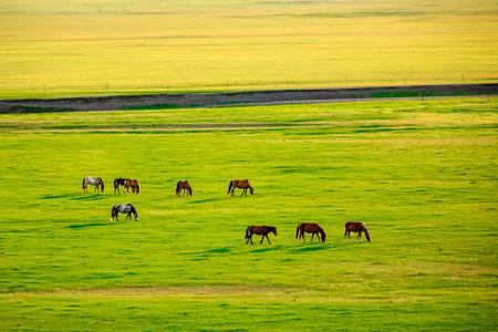 Foto de Inner Mongolia Hulunbeier horses - Imagen libre de derechos
