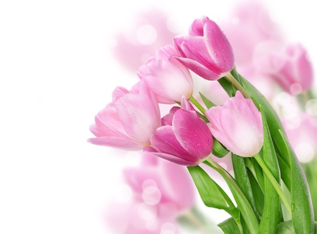 Photo for Tulip flowers postcard concept  - Royalty Free Image