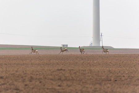 Photo for Small group of deer running across the field - Royalty Free Image